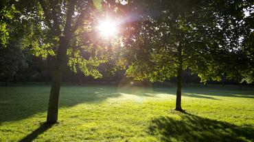 Blick durch zwei Bäume auf einer Wiese in Richtung Sonne